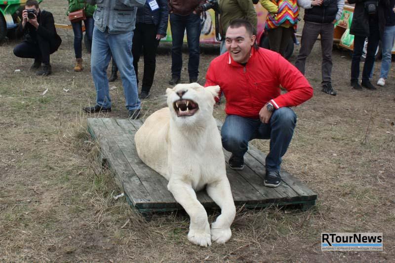 Прогулки со львами в Крыму 4