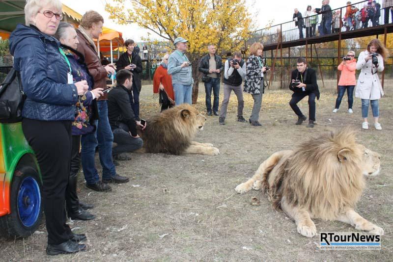 Прогулки со львами в Крыму 2