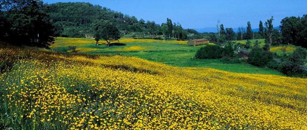 Испания в цвету 27