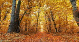 Осенними тропами по Азербайджану 1