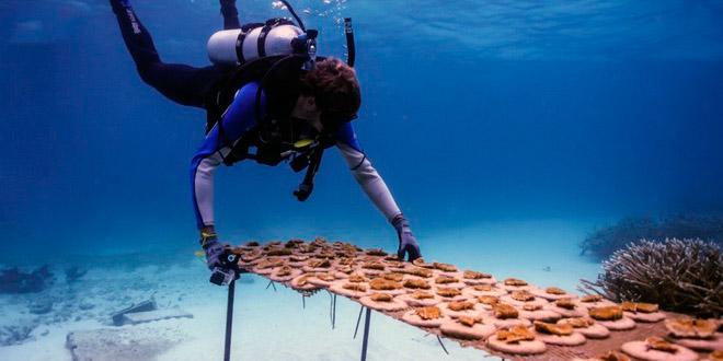 В Доминикане откроют Живой музей моря 1