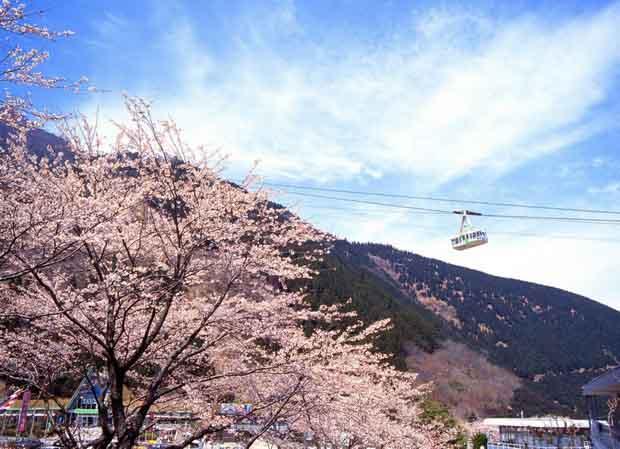 Бэппу - термальная столица Японии 15