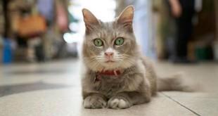 Увидеть город глазами кота
