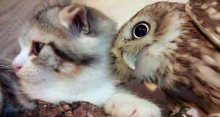 Про японское кафе - про сову и кота