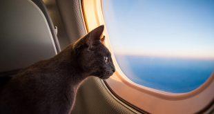 Как правильно путешествовать с домашними животными 13