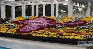 Бал хризантем или сказочная ботаника в Крыму
