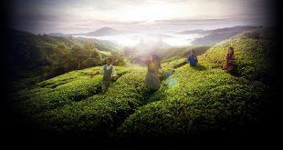 25 лучших идей для путешествия в Малайзию 17