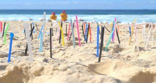 В Монако вступил в силу новый запрет на пластик 1
