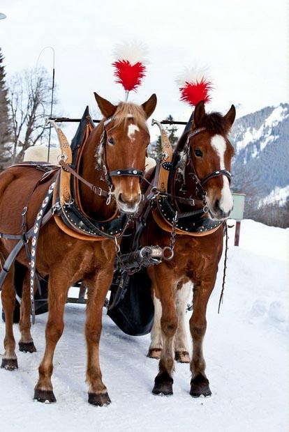Главные новости зимнего сезона в Швейцарии 2018/19 13