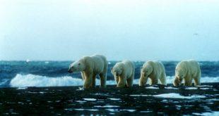 В списке ЮНЕСКО: Соловки, горы Алтая, остров Врангеля 11