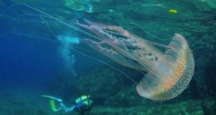 В Монако пройдет конкурс подводной фотографии