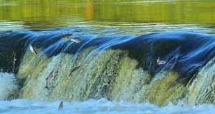Водопад на порогах Венты, Латвия
