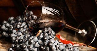 На винных заводах Крыма пройдут дни открытых дверей 5