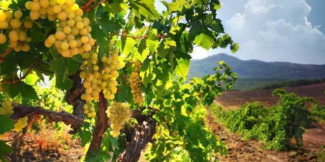Популярные вина Италии 1