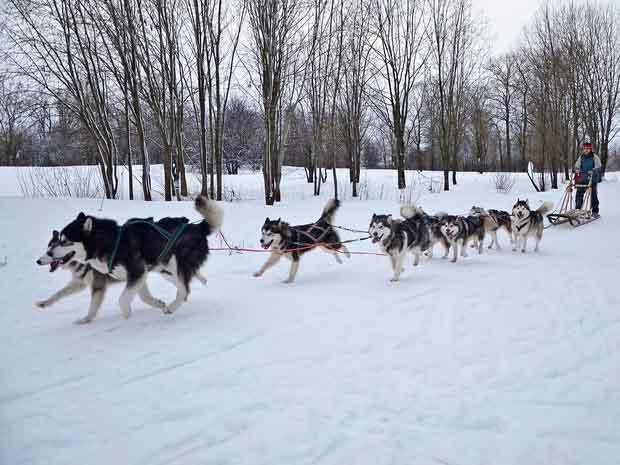 5 причин провести новогодние каникулы в Вологде 9