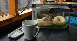 В кафе, к змеям! 6